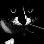 Gato-a-janela-preto.jpg
